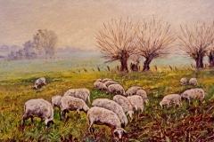 Schafe am Niederrhein